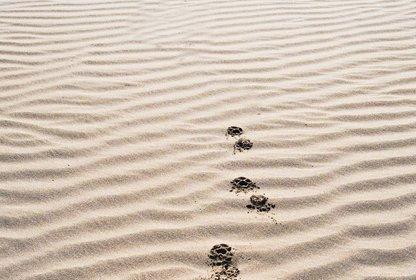 Bild: Magnezis Magnestic; CC0 - unsplash.com